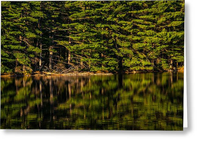 Reflection Of The Pines Greeting Card by Karol Livote