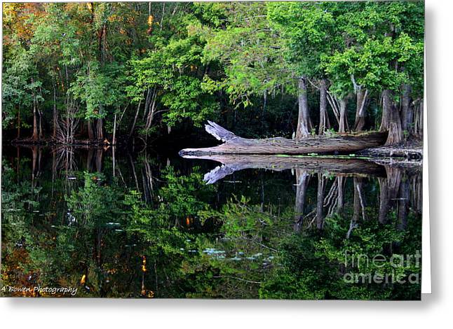 Reflection Off The Withlacoochee River Greeting Card by Barbara Bowen