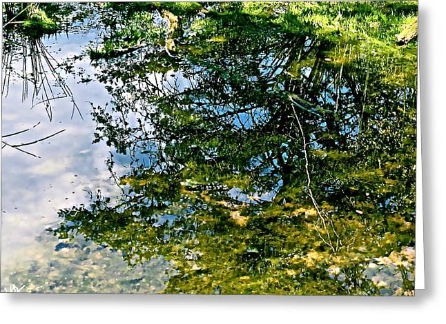 Best Sellers -  - Trees Reflecting In Water Greeting Cards - Reflection Pool Greeting Card by Debra     Vatalaro