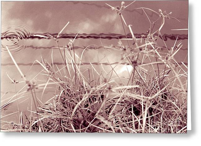 Greeting Card featuring the photograph Reflections 1 by Mukta Gupta