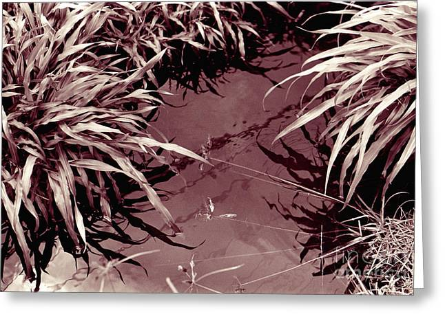 Greeting Card featuring the photograph Reflections 2 by Mukta Gupta