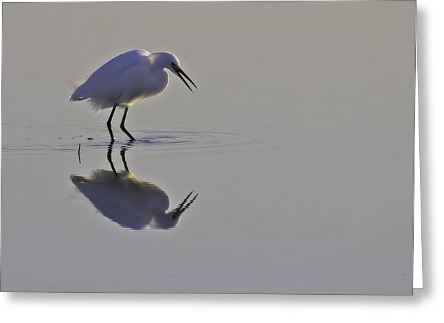 Reflections Greeting Card by Brian Wright
