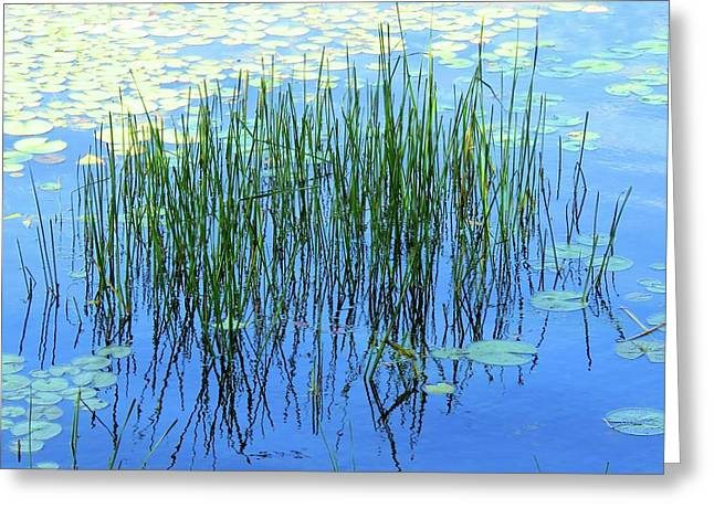 Reflections In The Bay Greeting Card