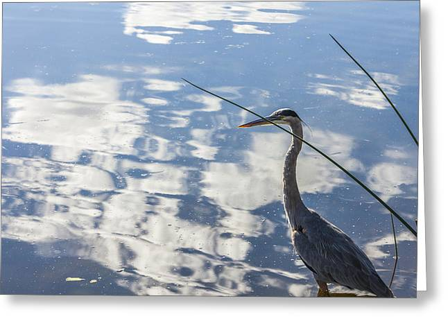 Reflections Of A Bird Greeting Card by Jon Glaser