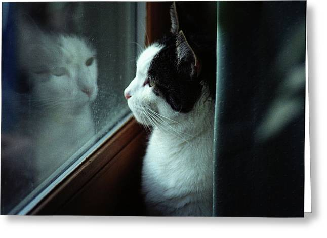 Reflections Of A Cat Greeting Card by Wanda Brandon