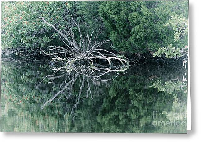 Reflections Of A Spider Tree Greeting Card
