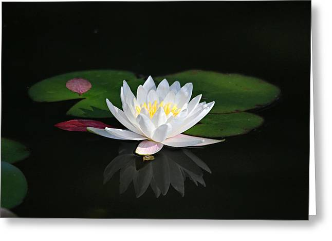 Reflections Of A Water Lily Greeting Card by Trina  Ansel