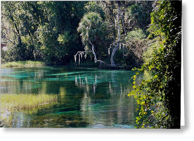 Reflections Of Rainbow Springs 2 Greeting Card
