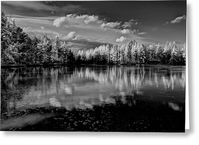 Reflections Of Tamaracks Greeting Card by David Patterson