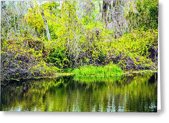 Reflections On A Beautiful Day Greeting Card by Madeline Ellis