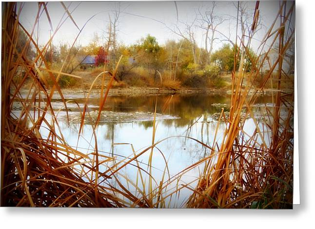 Reflections On A Pond -3 Greeting Card