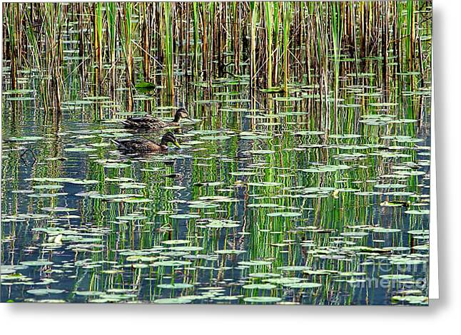 Reflections On Duck Pond Greeting Card