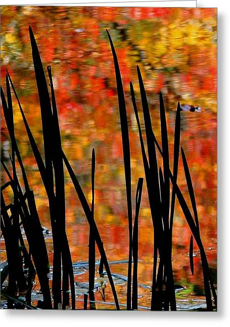 Reflections On Infinity Greeting Card by Angela Davies