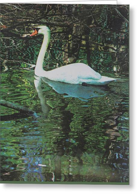 Reflections Greeting Card by Suzanne Gaff