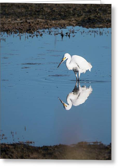 Reflections White Egret Greeting Card
