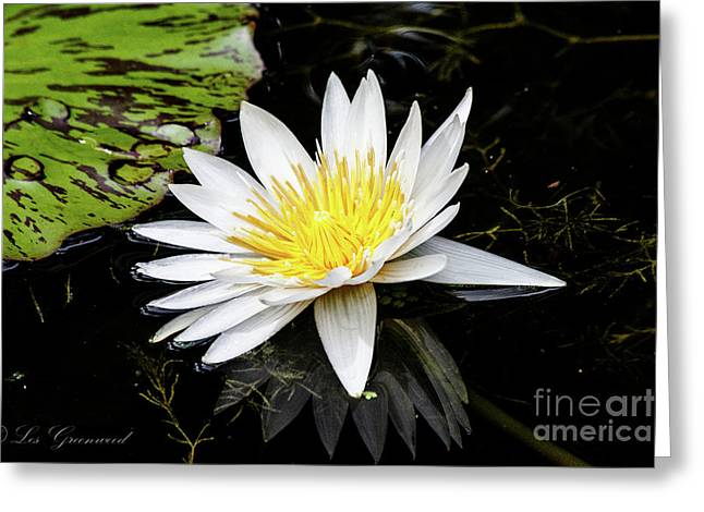 Reflective Lily Greeting Card