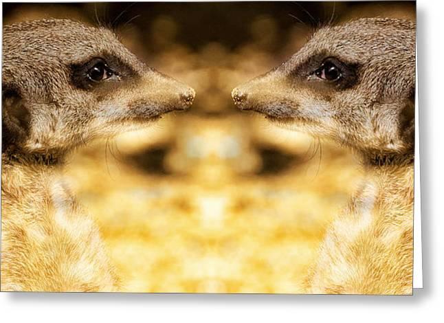 Reflective Meerkat Greeting Card by Chris Boulton