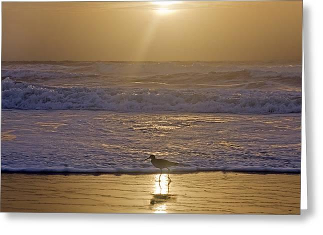 Reflective Spotlight  Greeting Card by Betsy Knapp