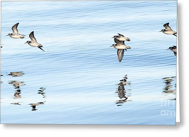 Refllections Of Flight Greeting Card by Mike Dawson
