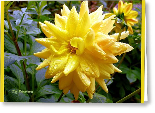Refreshed Dahlia  Greeting Card
