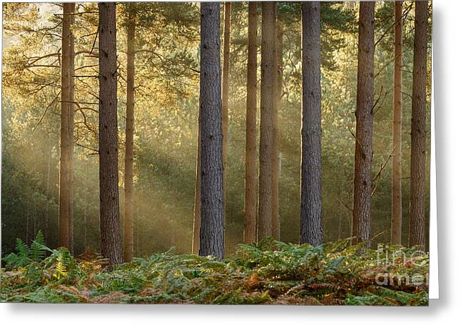 Refulgent New Forest Greeting Card by Richard Thomas