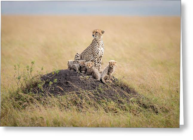 Regal Protector Greeting Card by Ted Taylor