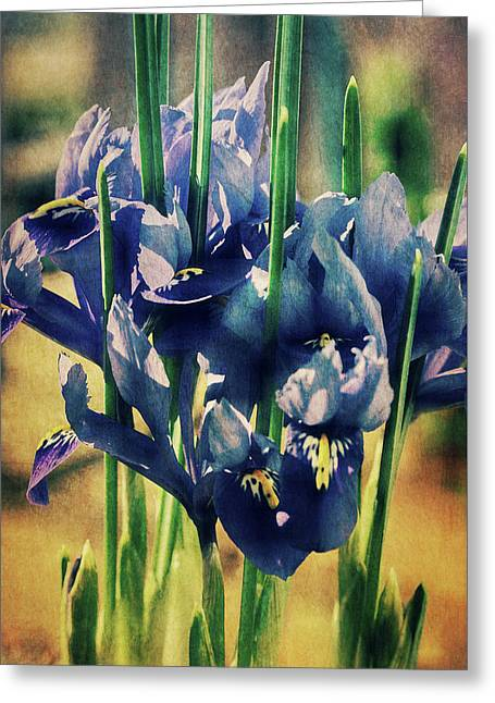 Greeting Card featuring the photograph Regal Splendour  by Connie Handscomb