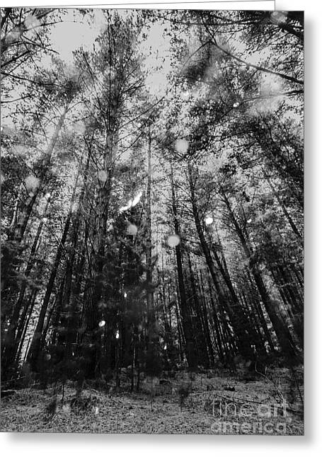 Reigning Pines Greeting Card