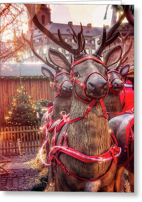 Reindeer At Copenhagen Christmas Market Greeting Card