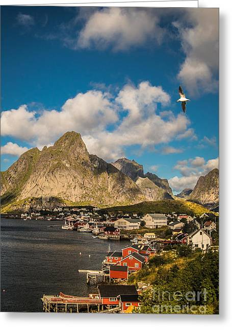 Reine In The Sun Greeting Card