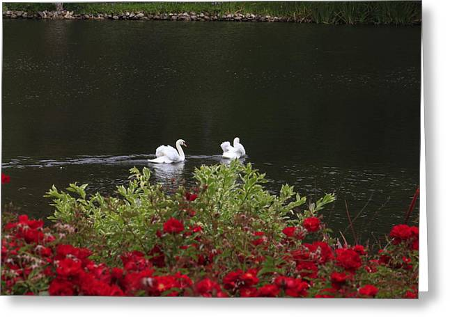 Greeting Card featuring the photograph Relax by Ivete Basso Photography