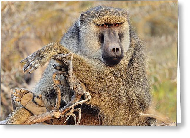 Relaxed Baboon Greeting Card