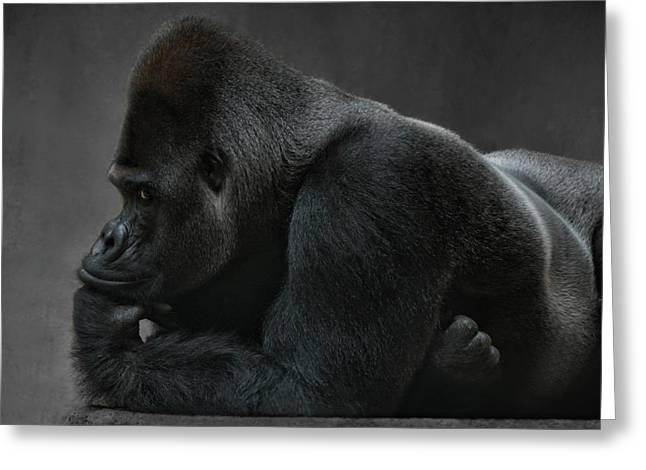 Relaxed Silverback Greeting Card