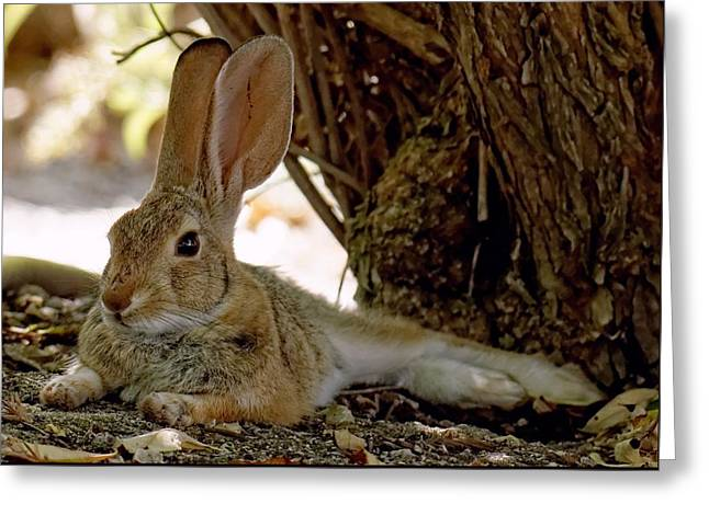 Relaxing Cottontail Greeting Card