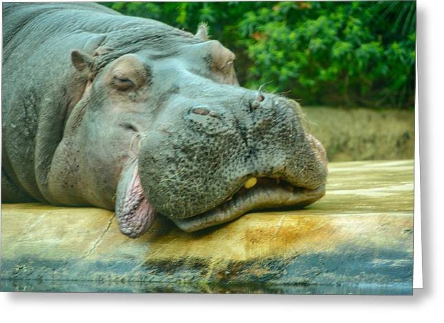 Relaxing Hippo Greeting Card