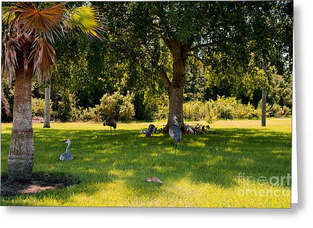 Relaxing In The Shade  Greeting Card