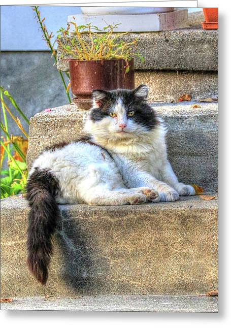Relaxing On The Stairs Greeting Card