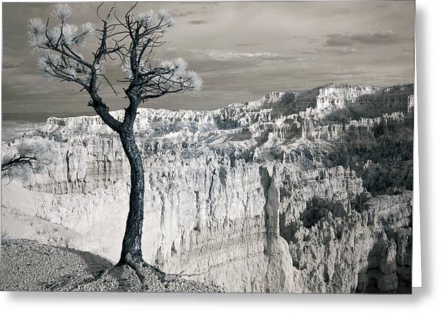 Ir Photography Greeting Cards - Remain Greeting Card by Mike Irwin