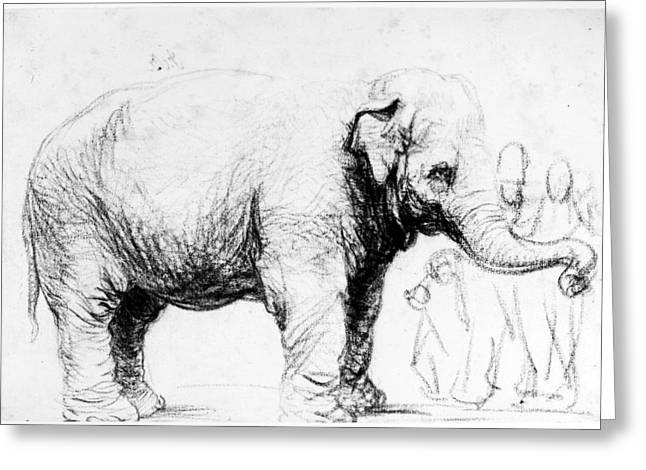 Rembrandt: Elephant, 1637 Greeting Card