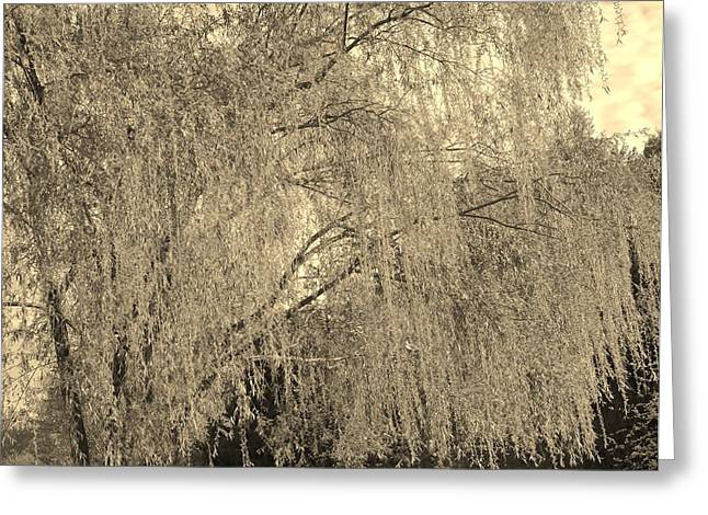 Remember Our Willow Greeting Card by Mary Zeman