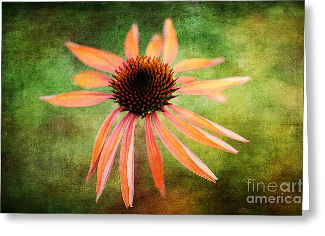 Peach Flower Greeting Cards - Remembering Summer Greeting Card by Lois Bryan