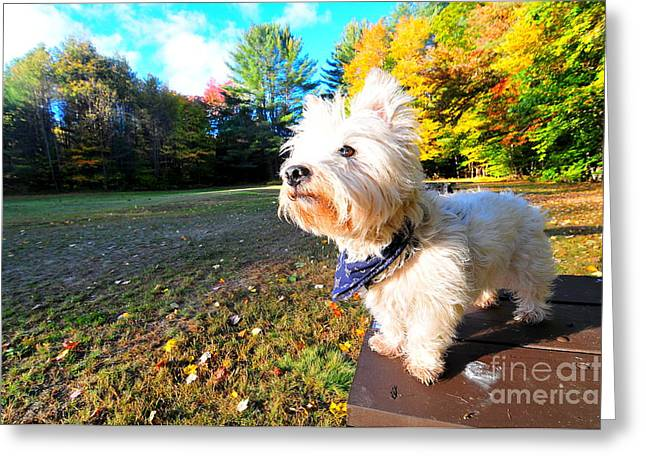 Reminiscing Westie Greeting Card