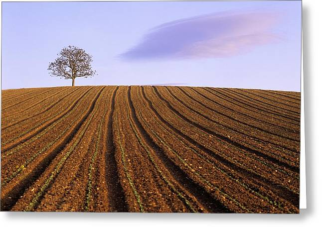 Remote Tree In A Ploughed Field Greeting Card by Bernard Jaubert