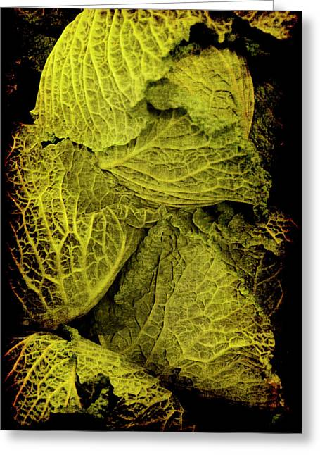 Renaissance Chinese Cabbage Greeting Card