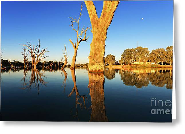 Renamrk Murray River South Australia Greeting Card by Bill Robinson