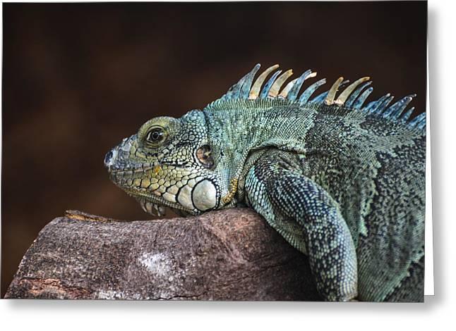 Reptile Greeting Card by Daniel Precht