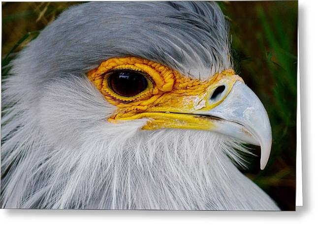 Reptile Hunter - Secretary Bird Greeting Card