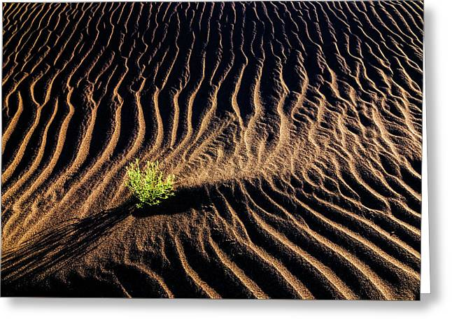 Resilient Plant Growing In Sand Greeting Card by Vishwanath Bhat