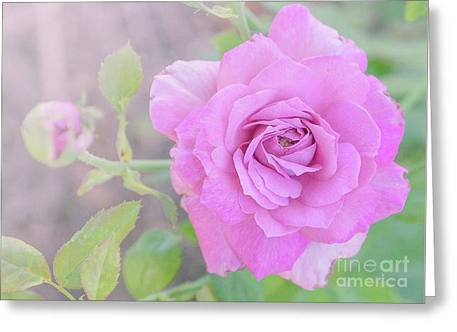 Greeting Card featuring the photograph Resilient Rose by Cindy Garber Iverson