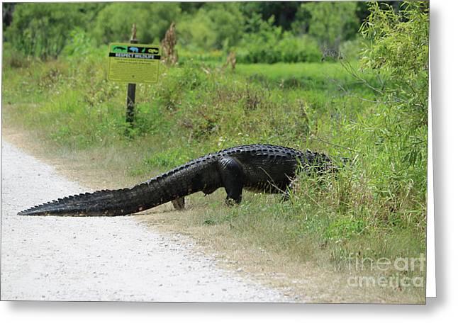 Respect Wildlife Large Gator Greeting Card